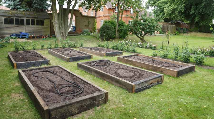 Picture of raised beds made from sleepers with grass paths