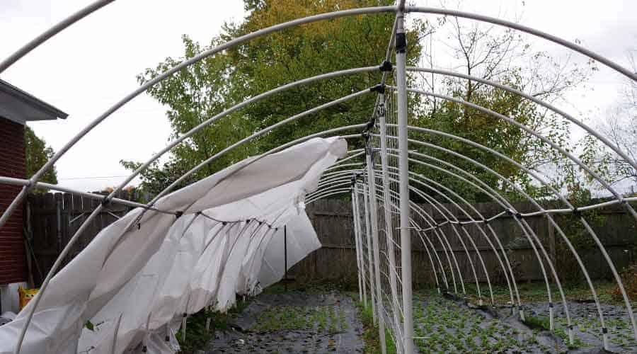 polytunnel damaged by winds