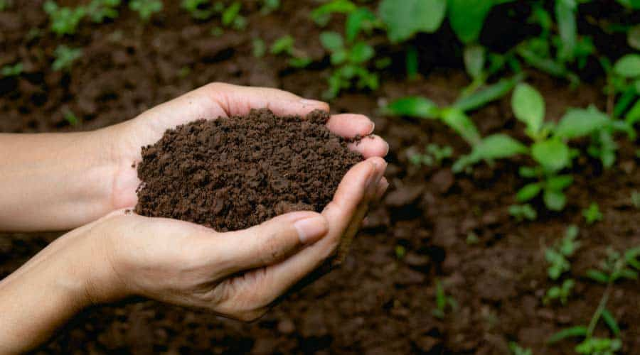 cupped hands holding soil