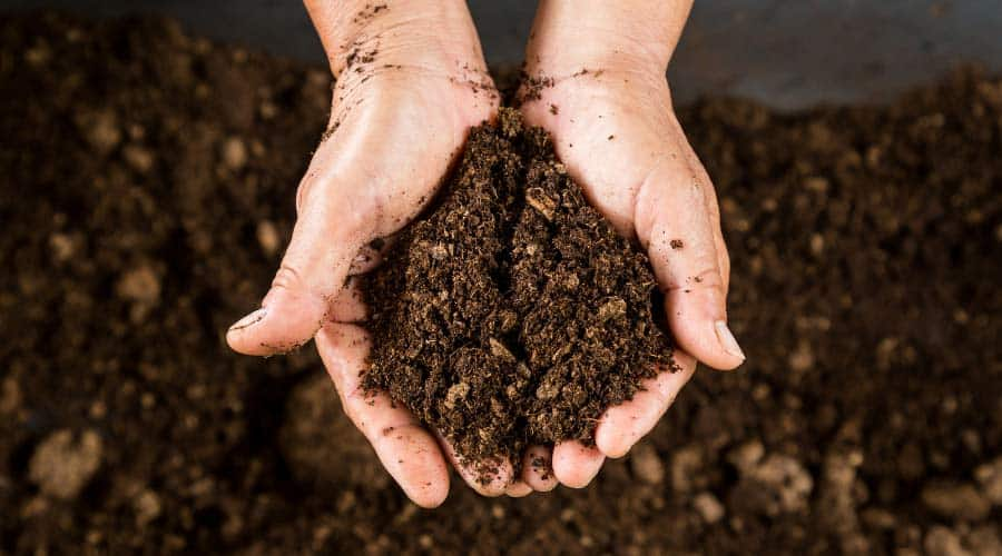 Picture of cupped hands holding potting soil