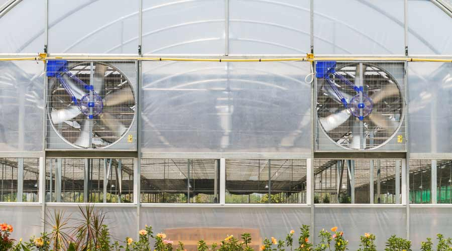 commercial polytunnel with fans