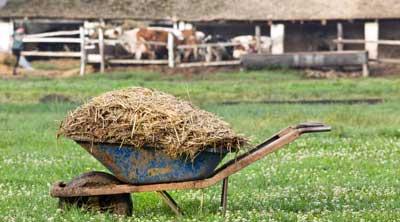 Picture of farmyard manure in wheelbarrow