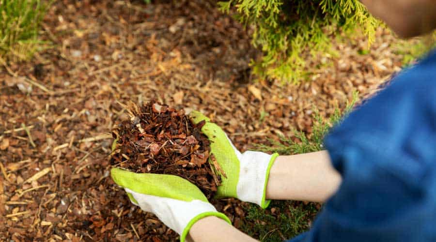 Picture of cupped hands holding wood chips