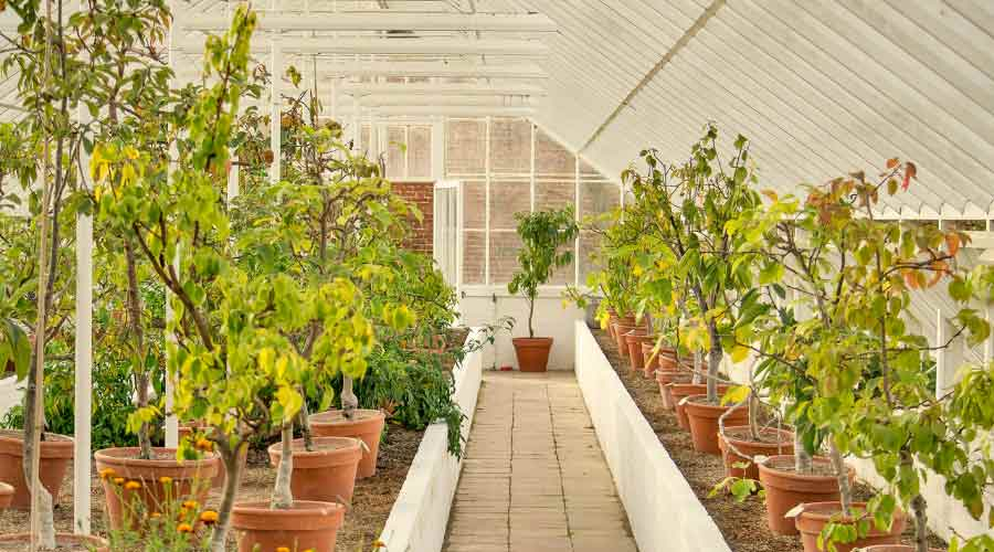 greenhouse of plants in clay pots