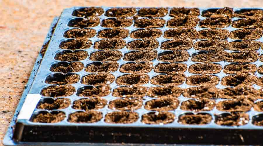 cell tray with compost