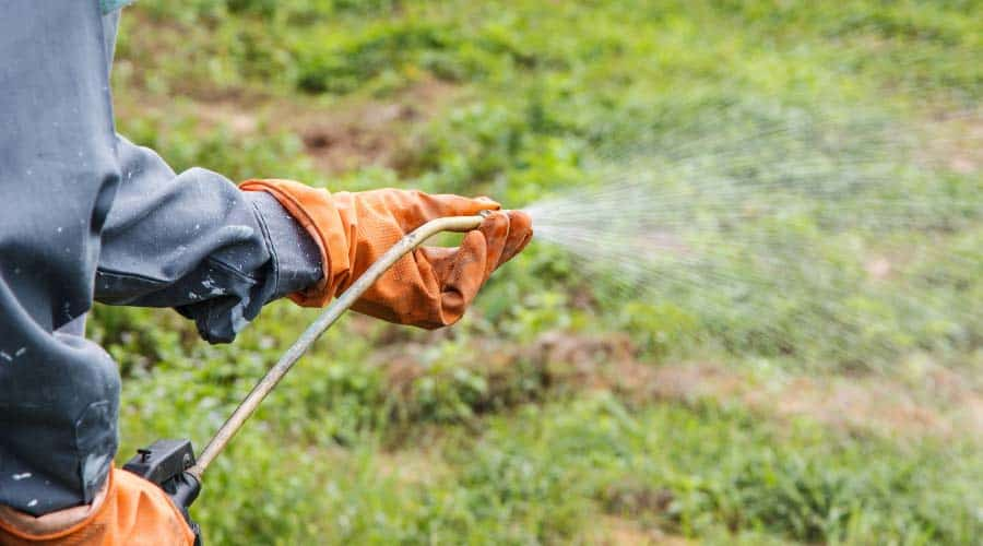 man spraying the garden with pesticides