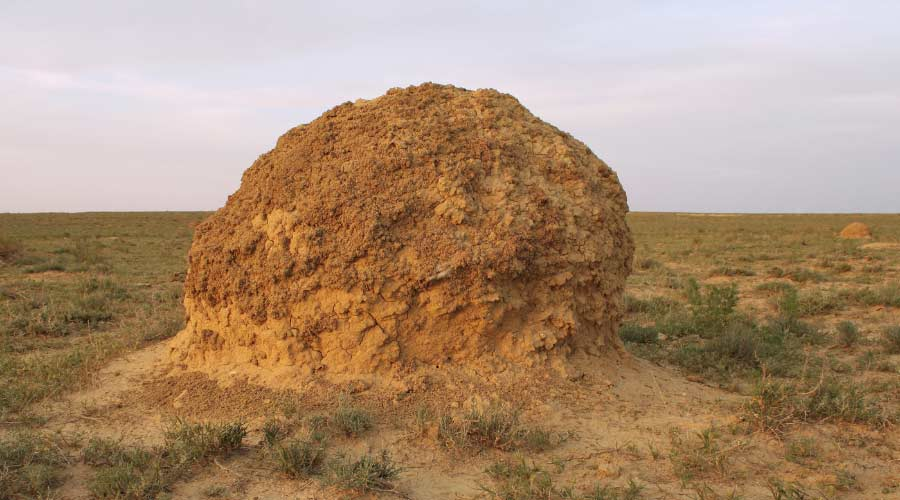 termite mound in soil