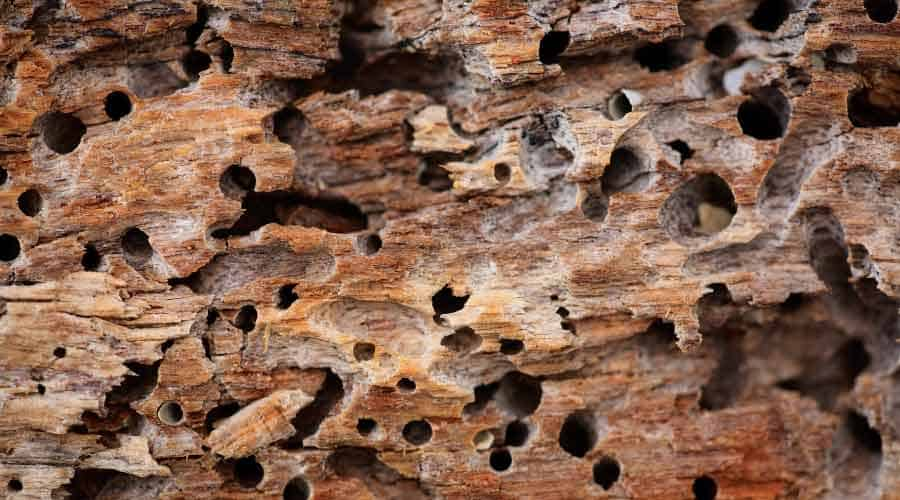 holes created by termites in log