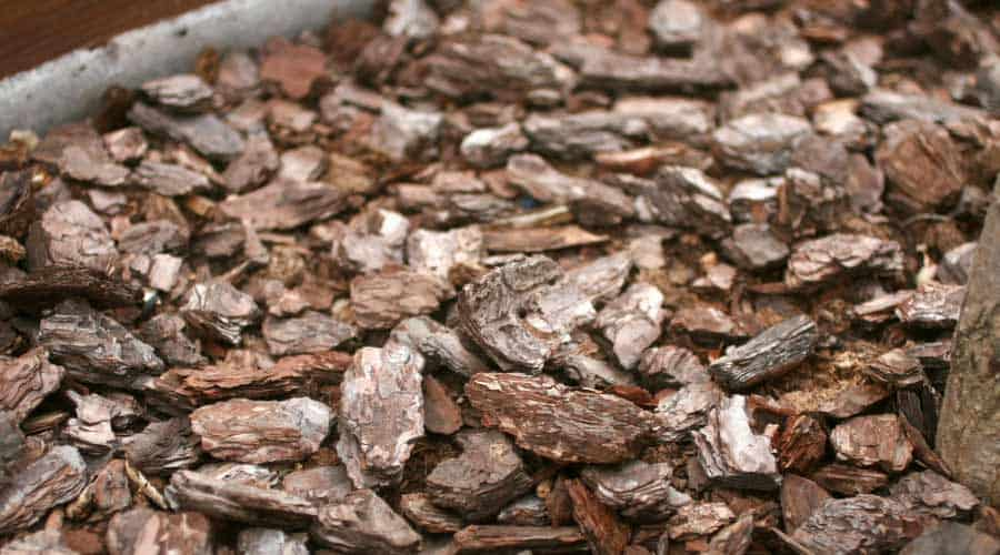 bark chip mulch in a potted plant