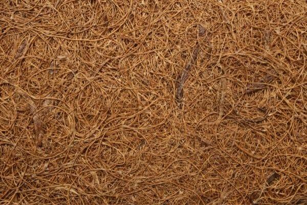 Picture of coconut fiber