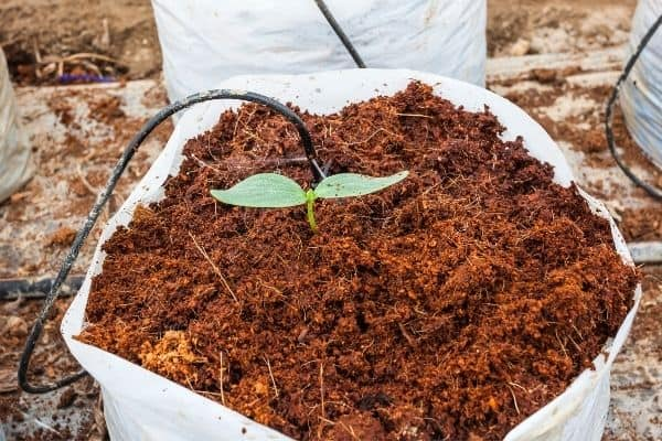 picture of container with coco peat and a plant