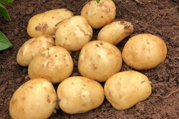 picture of acoustic potatoes