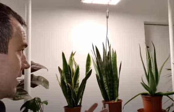 Tony O'Neill with a aloe vera and snake plants
