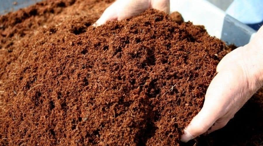picture of coconut coir vs peat moss