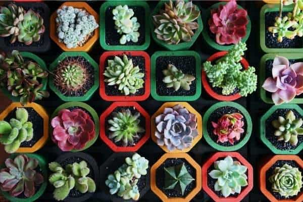 Colorful picture of Succulents