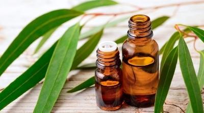 eucalyptus essential oil in a bottle