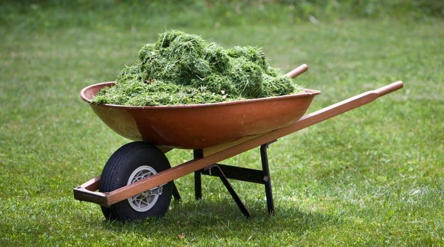 grass clippings in a wheelbarrow