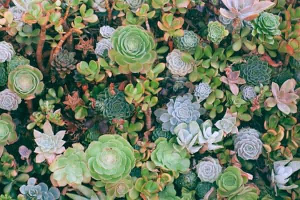 Picture of a bunch of different succulents