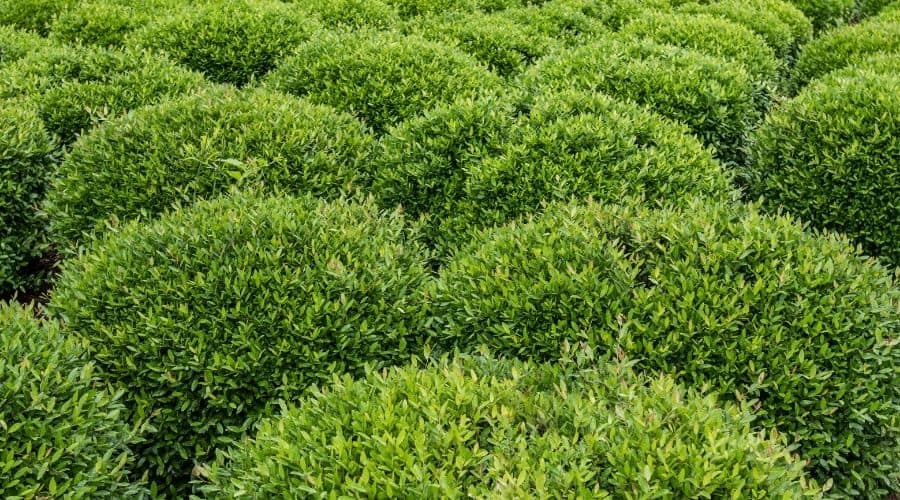 Picture of green shrub plants