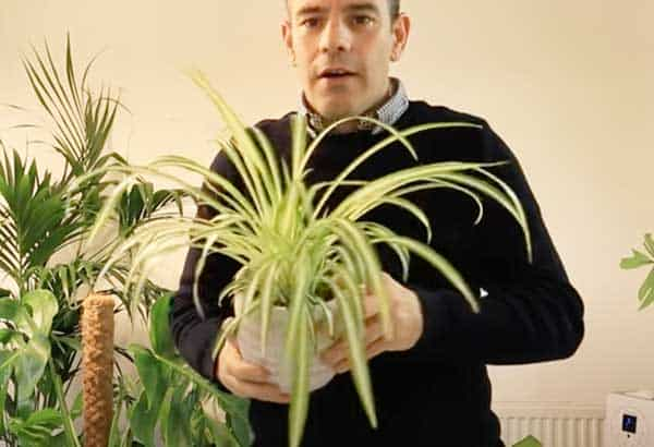Tony O'Neill with a spider plant