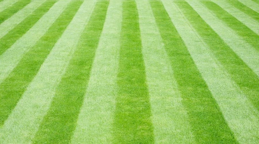 Picture of striped grass