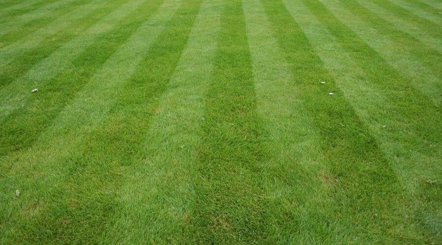 stripes mown into grass