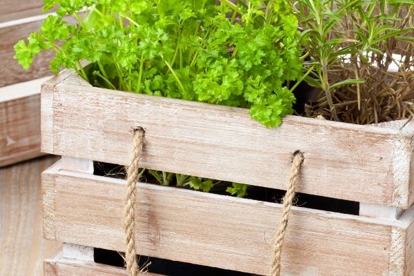 herbs in a wooden create