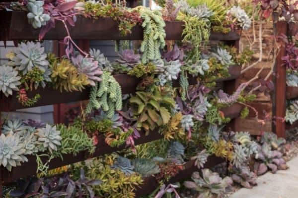 succulents on wooden shelves