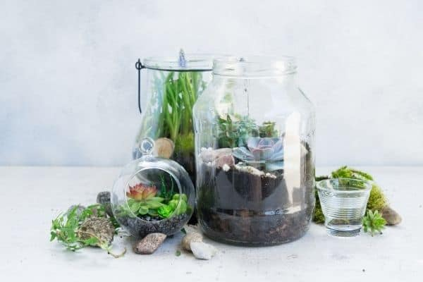 terrarium with succulents made from glass jars