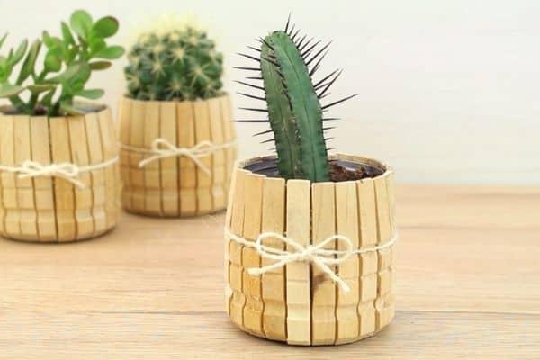 cactus in bamboo pot
