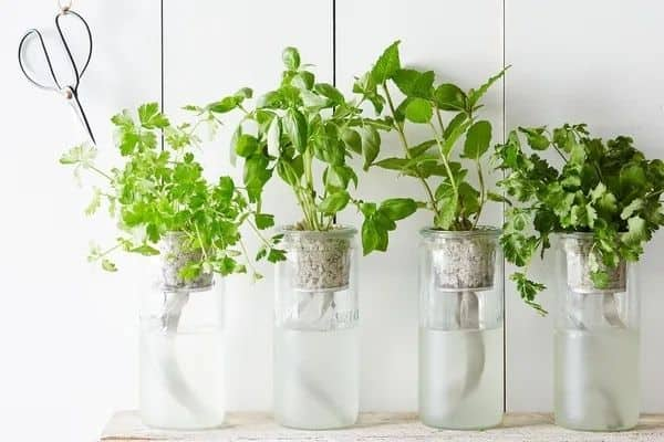 herb cutting in glass jars