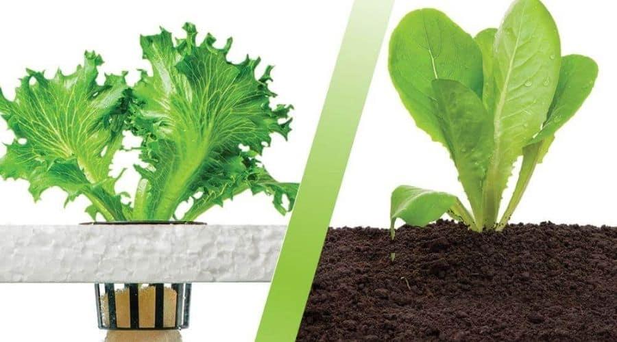 soil vs aquaponics