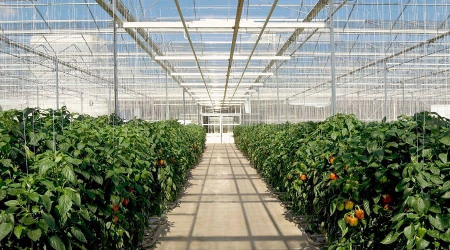 Picture of a greenhouse interior