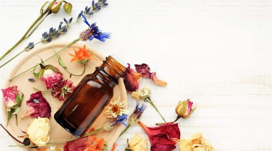 plants and herbs used in aromatherapy