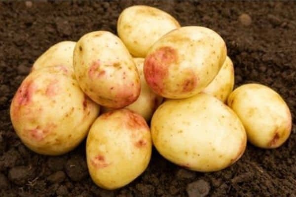 picture of cara potatoes