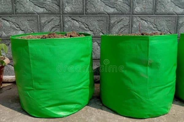 potatoes in green grow bags