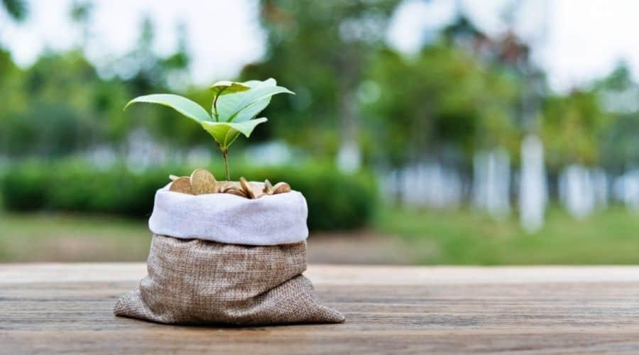 Hessian grow bag with plant