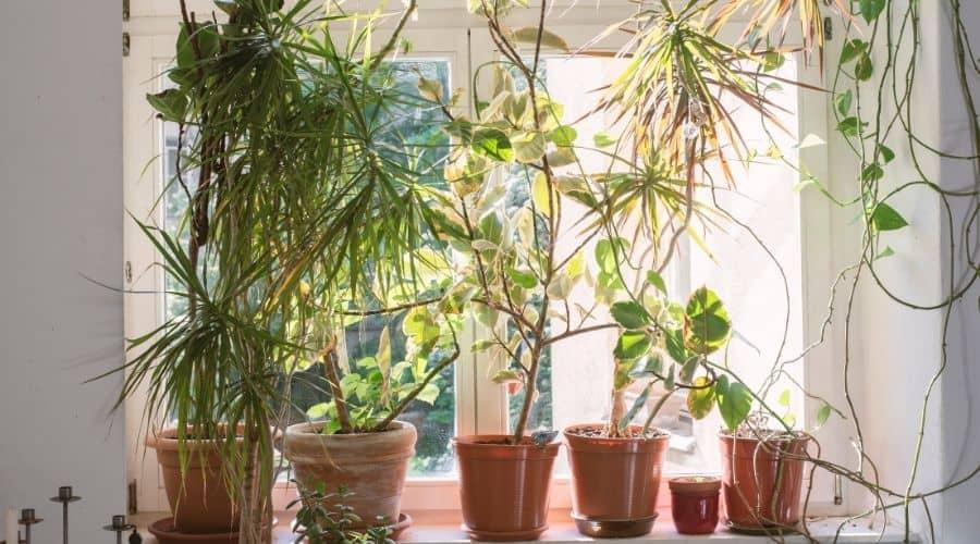 house plants on window sill