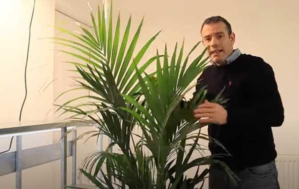 Tony O'Neill with a Kentia palm