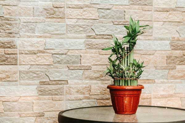 lucky bamboo on a table in front of a stone wall
