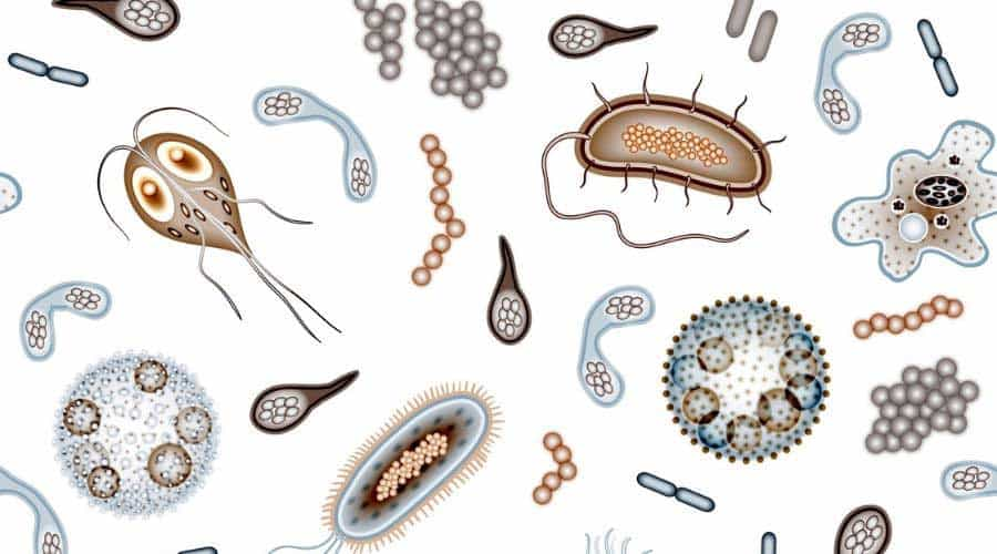 Microbes that live in soil