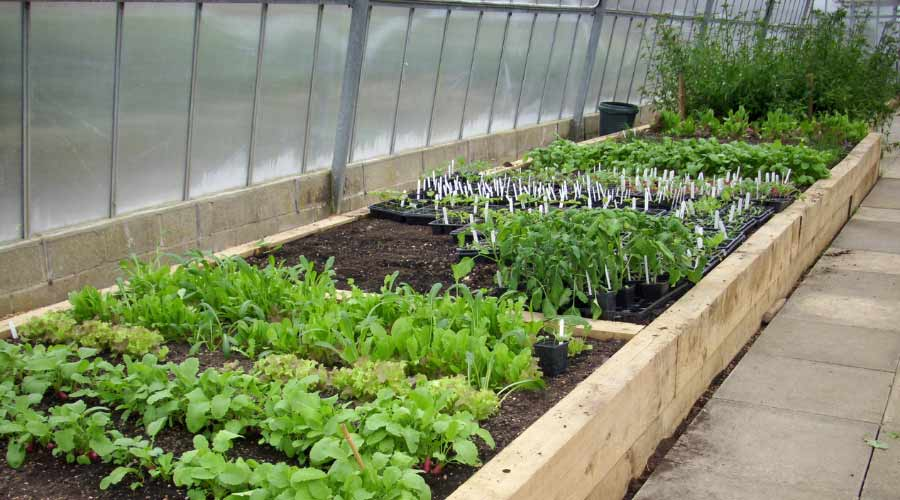raised bed in a greenhouse