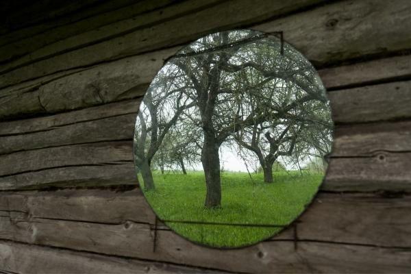 round mirror reflecting trees