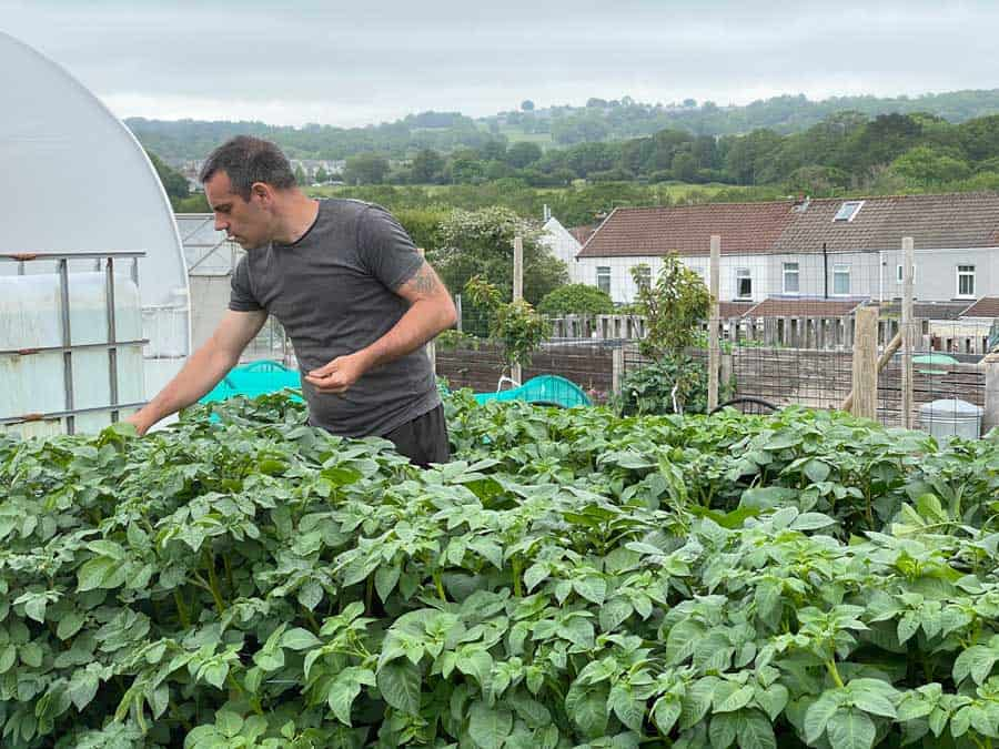 Picture of Tony O'Neill tending potatoes