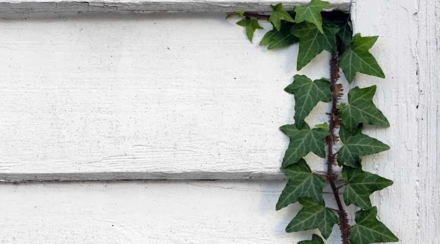 picture of vine on wall