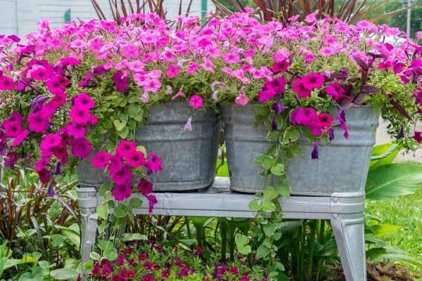 Galvanized Tub Planter Box