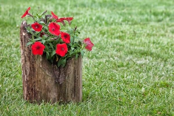 Log Herb Planter