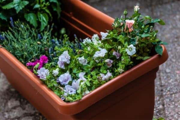 Self-Watering Planter Boxes