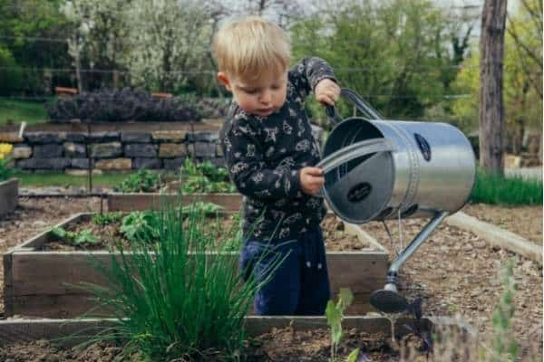 A picture of a little boy watering a garden with a watering can