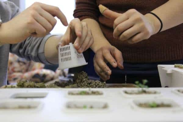 A picture of two people working with a hydroponic basket